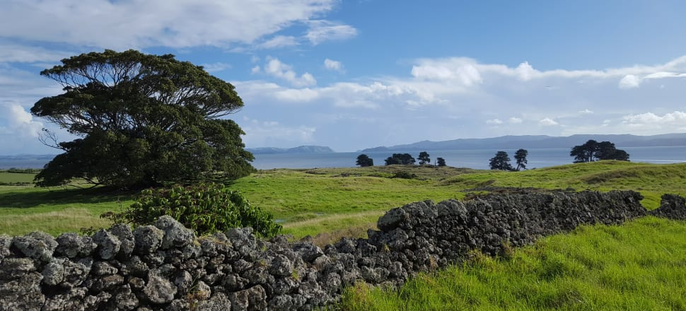 View of Moreton Bay Fig tree and Manukau Harbour at Otuataua Stonefields, Mangere, Auckland. Photo: Callan Bird