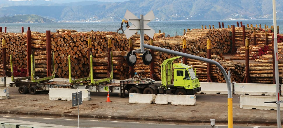 New Zealand's forestry strategy has amounted to little more than harvesting pinus radiata and shipping it in log form to China in recent years, as seen in this picture of logs stacked for export from Wellington. Photo: Lynn Grieveson.