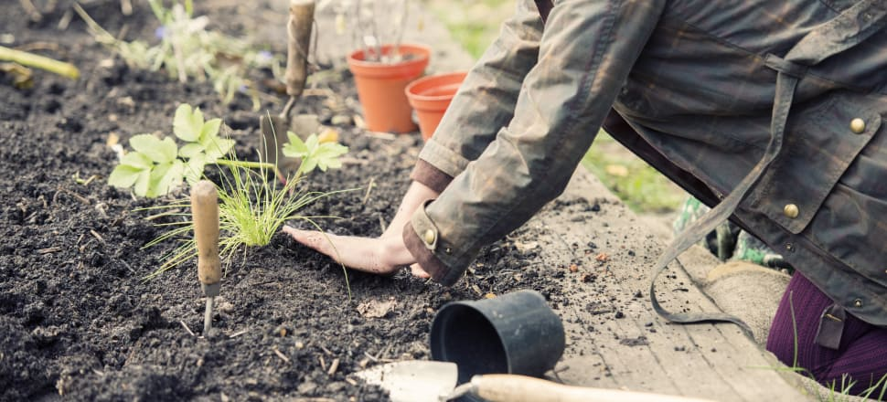 Research found important links between urban agriculture and enhancing active citizenship. Stock photo: Getty Images