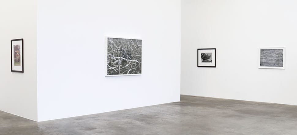 Peter Peryer has thrived in the analogue and digital eras of photography. Photo: Jonathan Smart Gallery