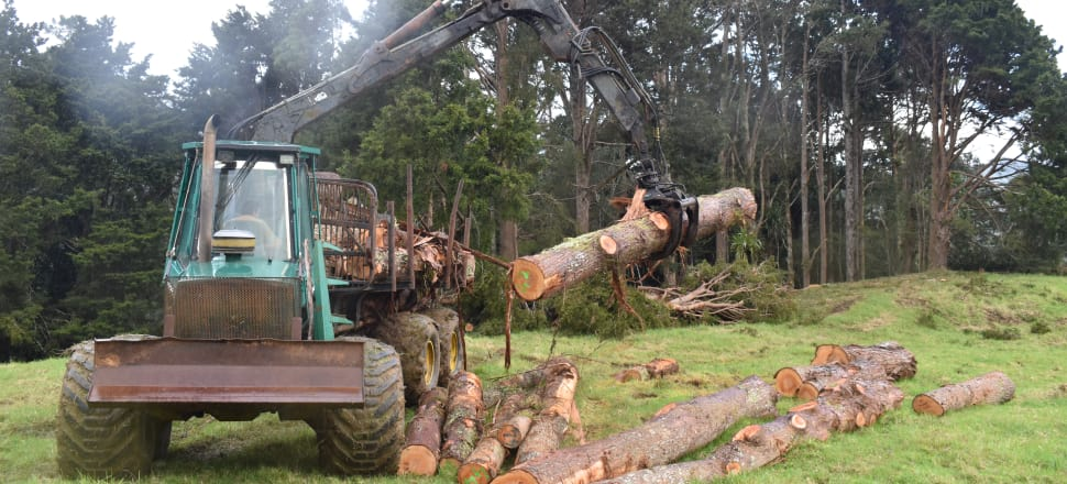 Fifty-four tōtara selectively harvested from a farm with nearly 50 hectares of native tree forest. Photo: Paul Quinlan