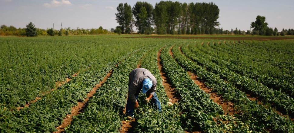 MBIE's blacklist was released six months after employers were threatened with tougher penalties for failing to meet minimum employment standards for migrant workers. File photo: Getty Images