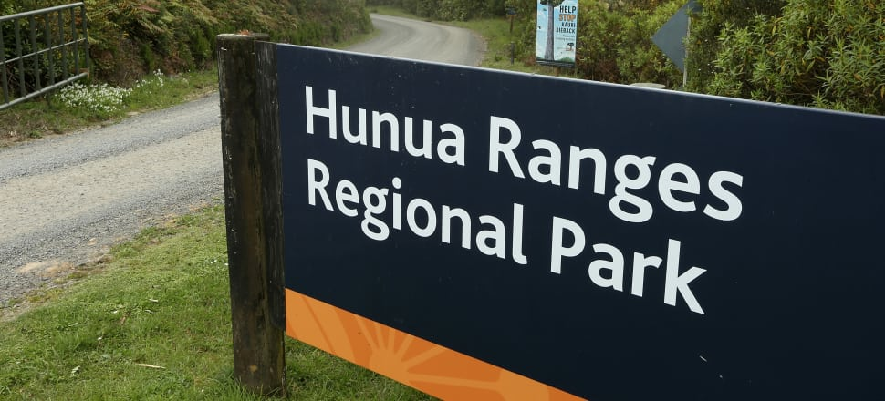 Hunua is home to several at risk species, including kōkako which are threatened by predators. Photo: Getty Images