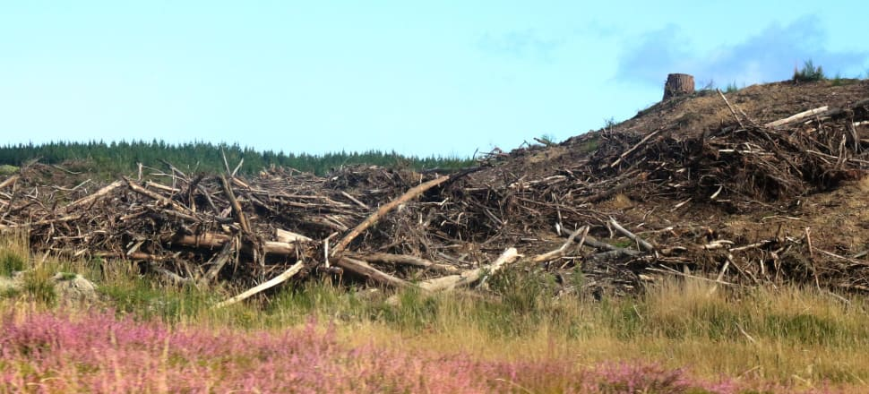 Debate about dealing with climate change should focus on land use change, but simply planting forests should not be the only solution, Simon Upton argues. Photo: Lynn Grieveson
