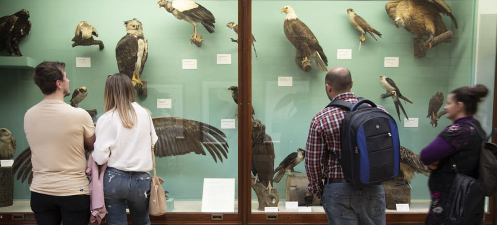Taxonomy is the science of species discovery. Photo: Getty Images