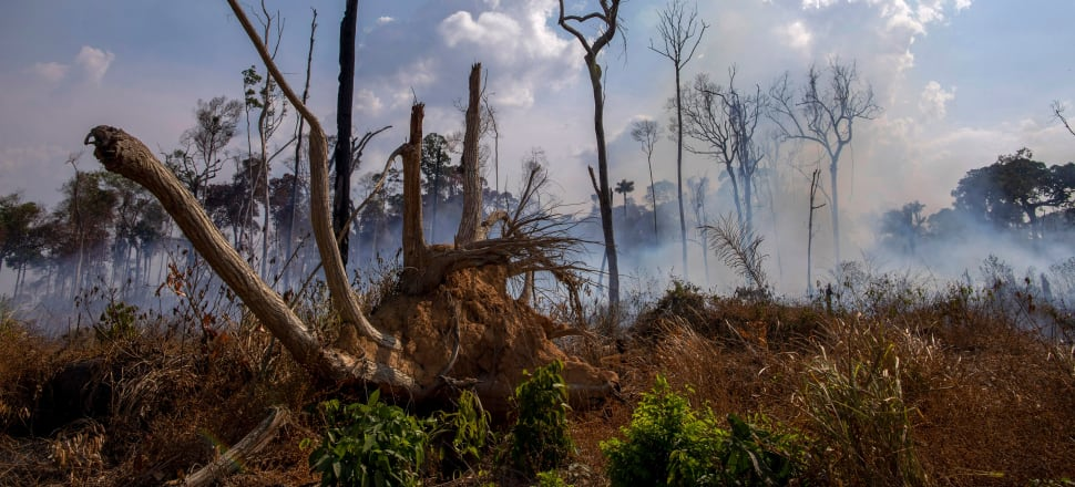 Brazil has deployed two C-130 Hercules aircraft to douse fires devouring parts of the Amazon rainforest. Photo: Getty Images