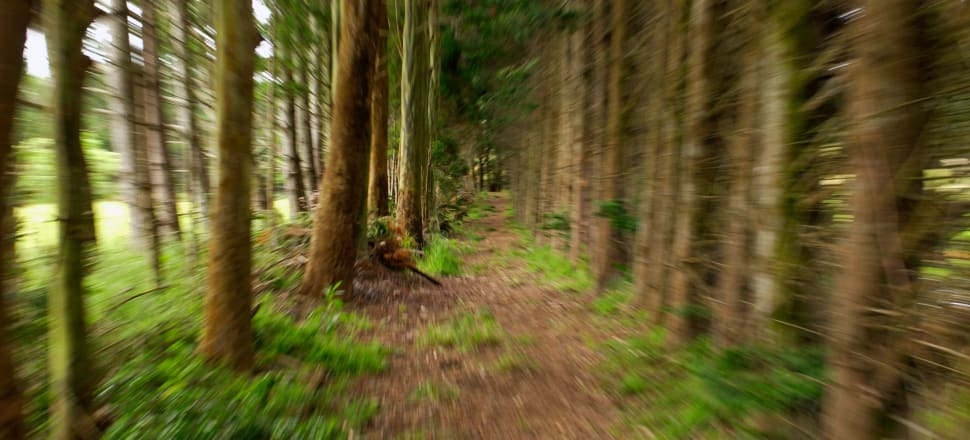While certain farm acquisitions have become harder, some forestry acquisitions have become easier. Photo: Getty Images.