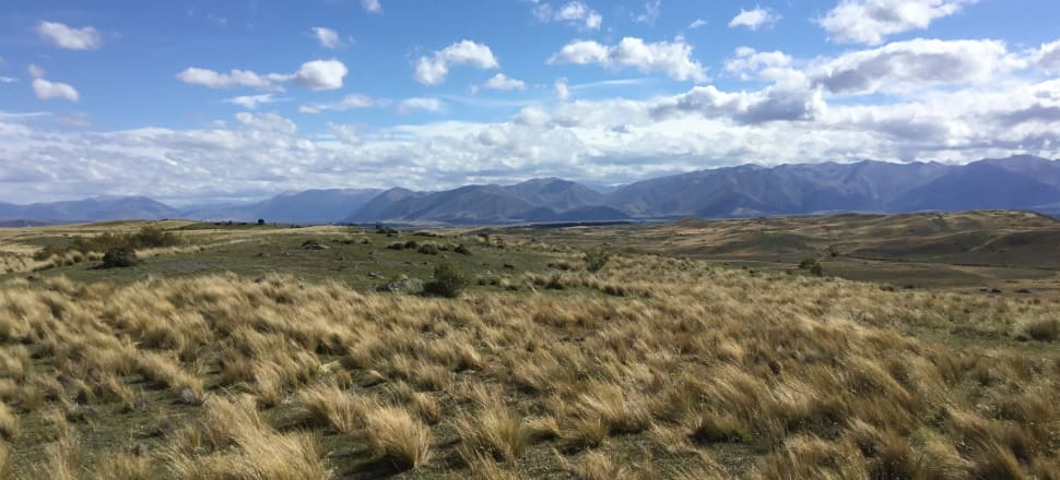Part of Simons Pass Station, in the Mackenzie Basin, which might become conservation land through tenure review. Photo: LINZ