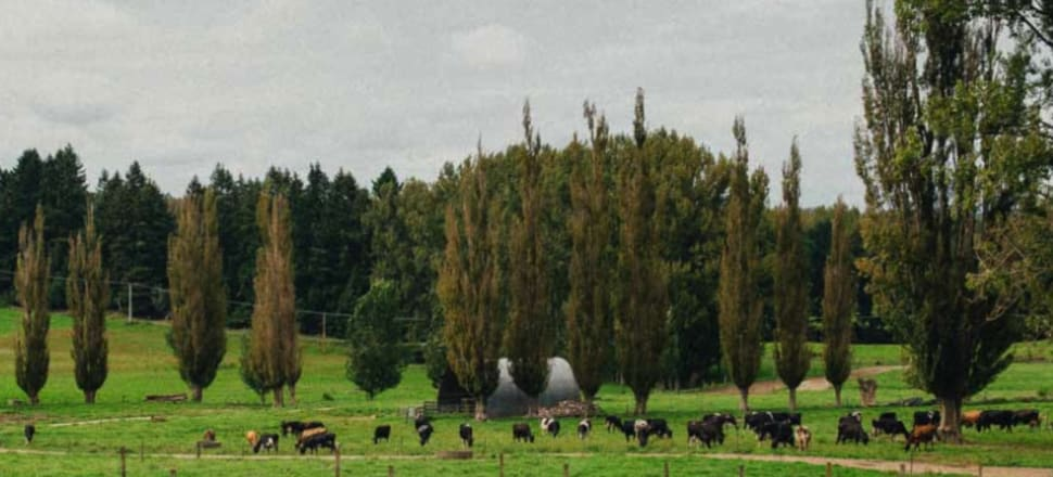 Pamu is developing a large-scale organic farm in the central North Island.  Photo: Pamu