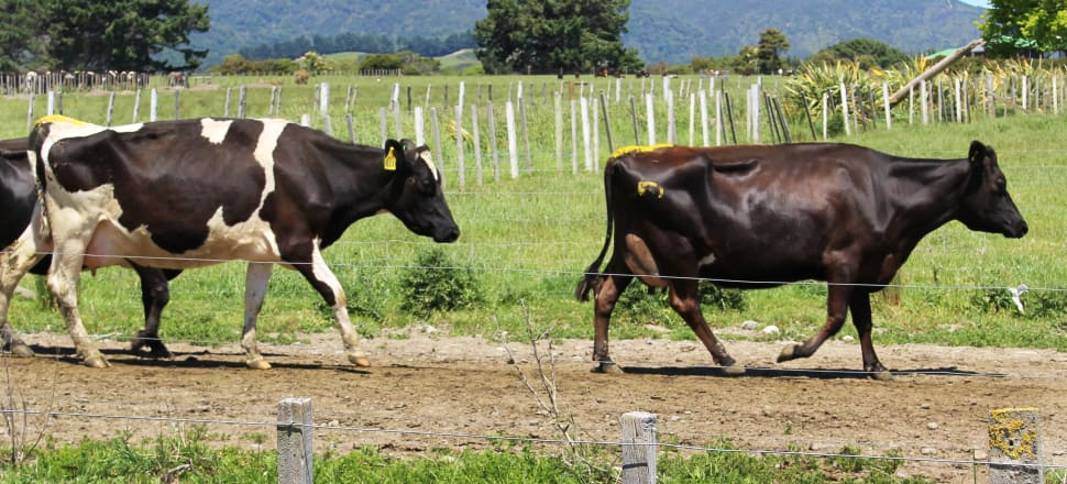 A new ICCC report has offered a path towards including the agricultural sector in the Emissions Trading Scheme. Photo: Lynn Grieveson.