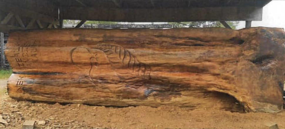 A Supreme Court judgment says swamp kauri logs must have lost their identity as a log to be legally exported. MPI decided this is a genuine sculpture. Image: Official Information Act
