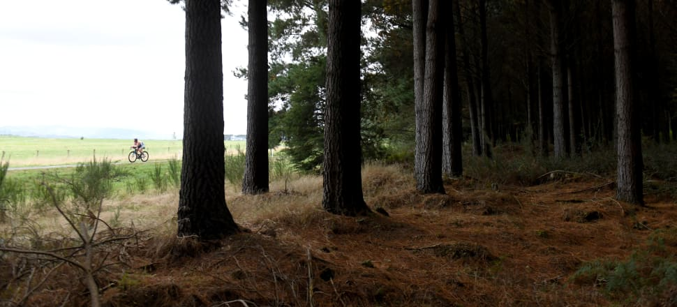 The main aim is to produce a stable supply of forestry-generated NZU carbon credits for the four companies. Photo: Getty Images