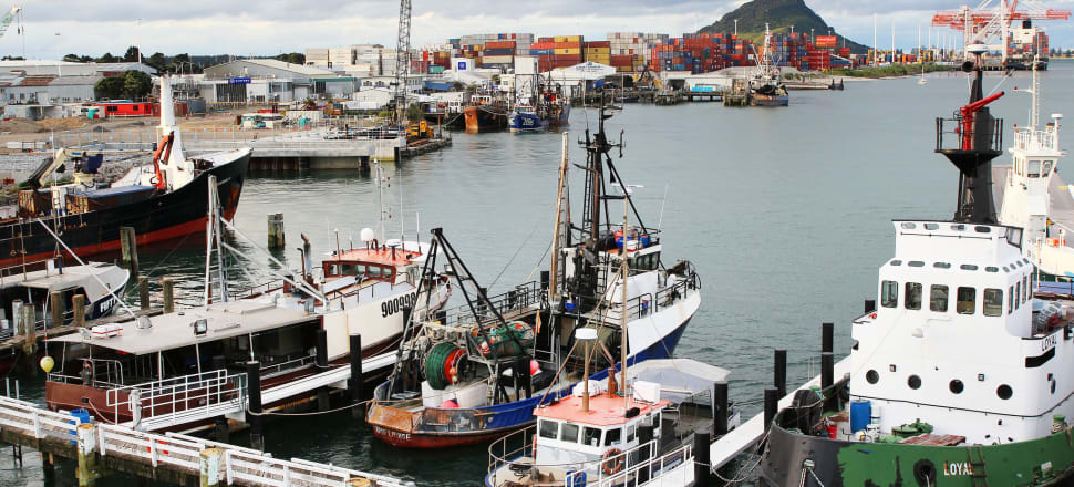 Fishing boats tied up at Tauranga Port. Photo by Lynn Grieveson