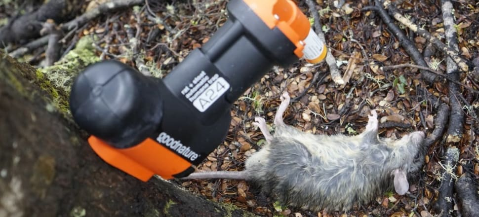 A Goodnature trap notches up another rat in the northern Ruahine Forest Park, Manawatu. Photo: Anthony Behrens