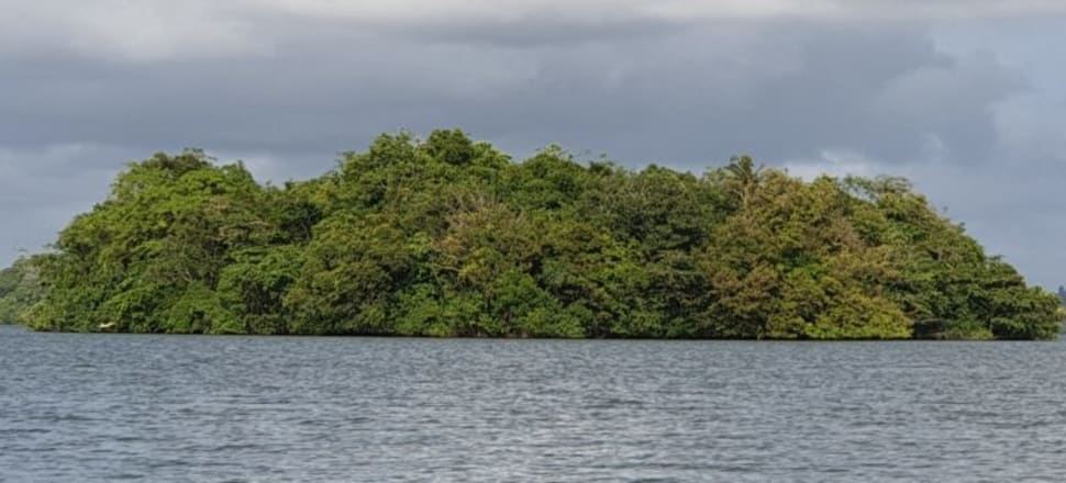 Several initiatives have been undertaken to expand the total area of mangrove forests around Sri Lanka. Image courtesy of Kanchana Handunnetti