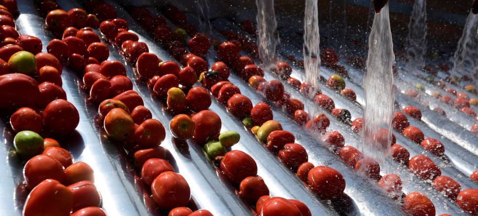Supermarkets might make sure their tomatoes are certified - but that process is corrupt. Photo: Getty Images