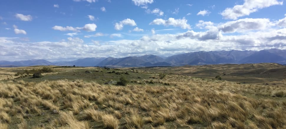 Tussock country on Simons Pass Station, in the Mackenzie Basin. Photo: LINZ