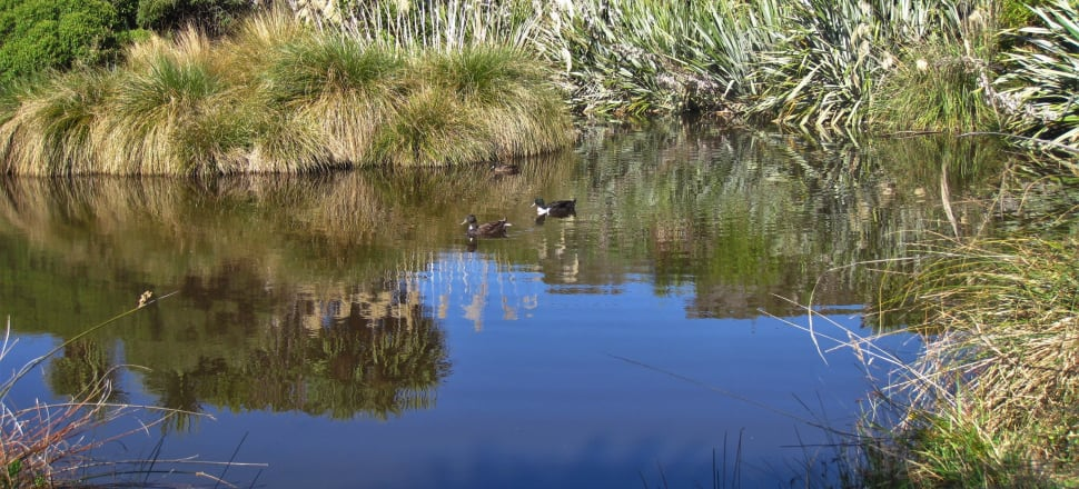 Wetlands are home to a multitude of fascinating species. Photo: Karen Denyer