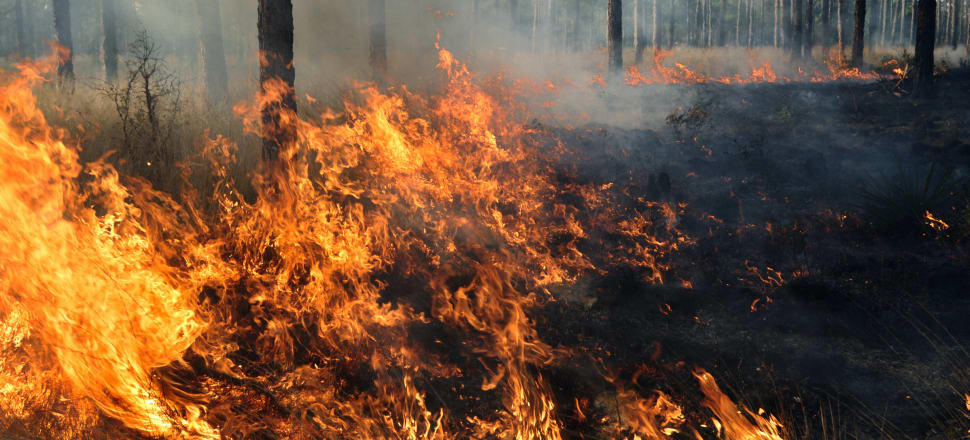 Extreme fire can release carbon stored in trees as well as carbon stored in the soil below them. Photo: Getty Images