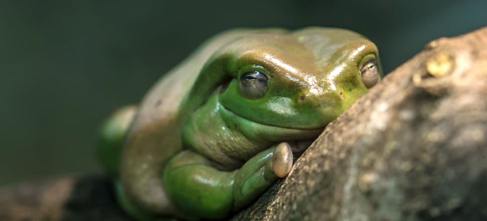 Climate change adds to frog woes