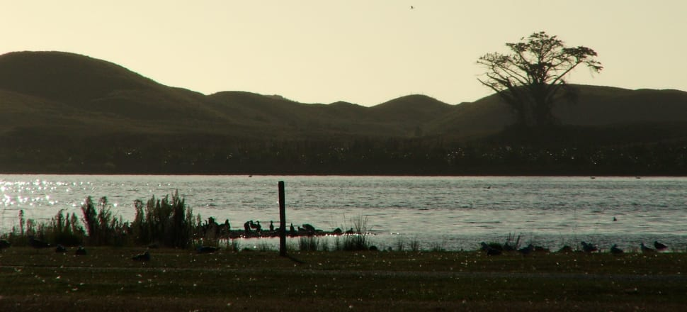 Lake Horowhenua is apparently so toxic that a child could die if it swallowed enough of its water. Photo: Brian Stocks