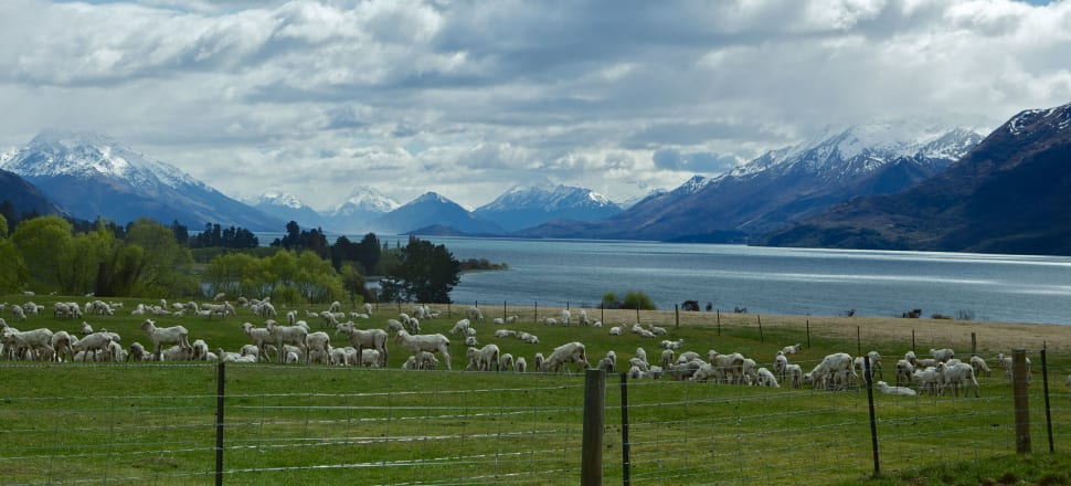 Mt Nicholas Station, near Queenstown, runs 29,000 merino sheep and has contracts with Icebreaker and an Italian firm. Photo: Mt Nicholas Station