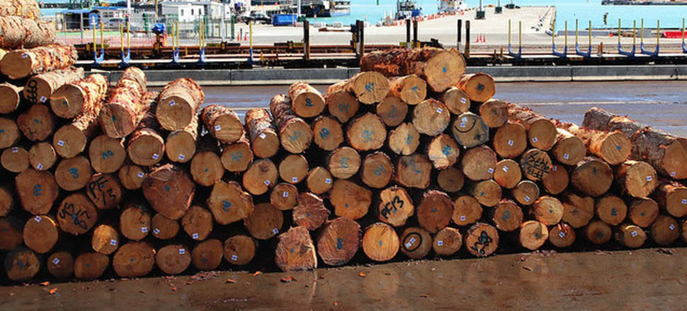 Forest owners worry a new bill will hamper the exporting of logs. Photo: Lynn Grieveson