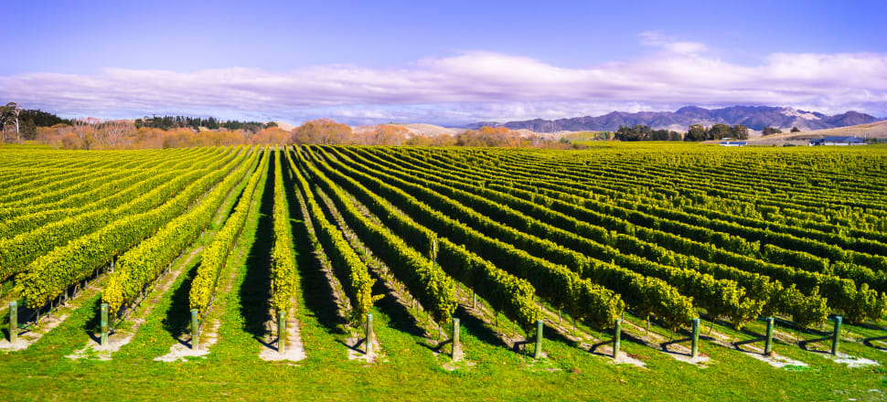 The wine industry is facing criticism for continuing harvest during the Covid-19 lockdown, and is facing problems with worker accommodation. Photo: Getty Images