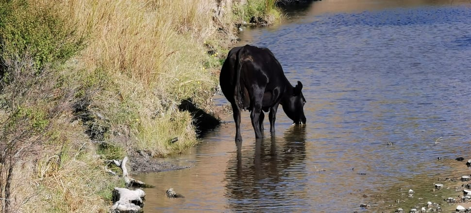 The Government is cracking down on nitrogen fertiliser use and asking councils to speed up their planning processes in order to clean up the country's waterways. Photo: Mark Jennings